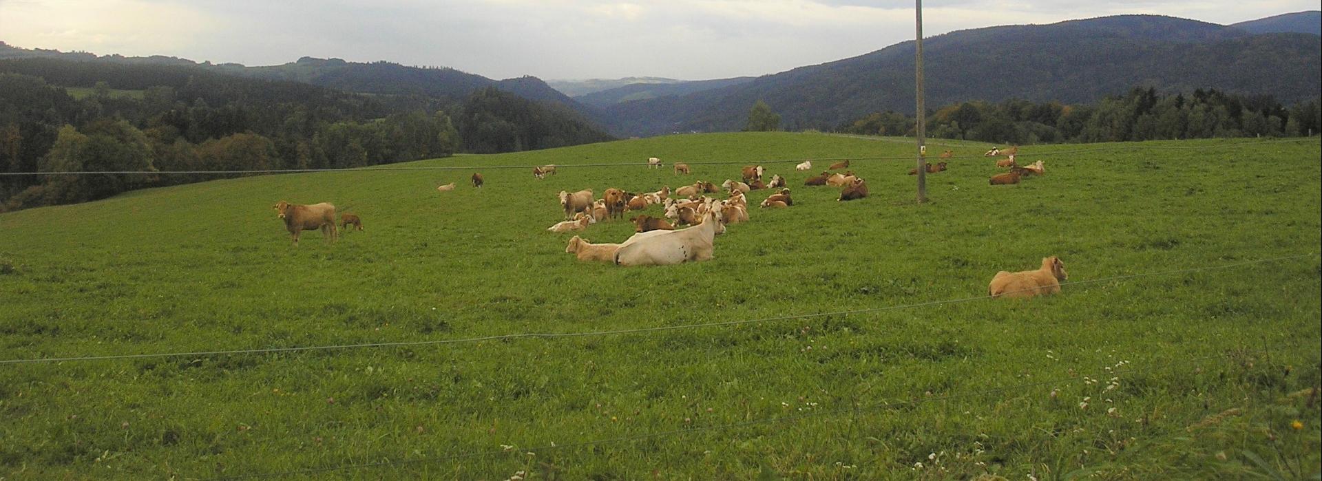 <p><strong>Welfare.</strong> Pohoda ve stáji i venku. Zvířata jsou od jara do podzimu na pastvách, v zimě pak volně ustájena <strong>bez uvazování</strong>.</p>